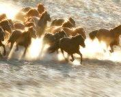 If Wishes were horses blog post Alex Truesdale Wills In Oxshott